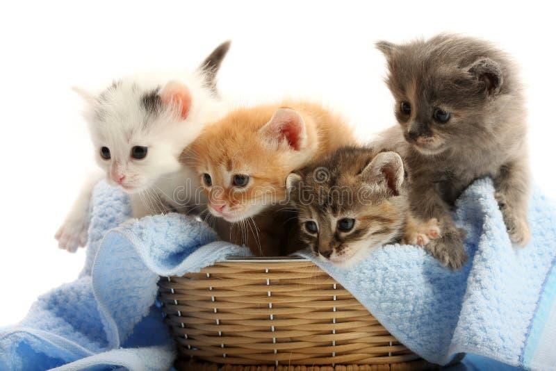 篮子小猫小的秸杆 库存照片