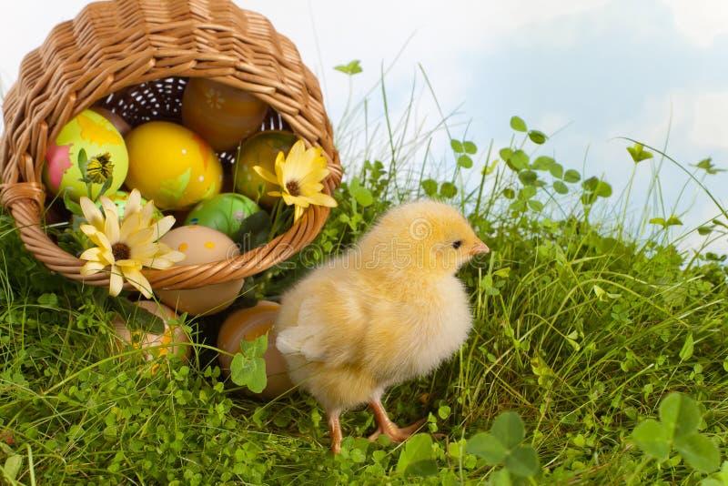 篮子小鸡复活节黄色 库存照片