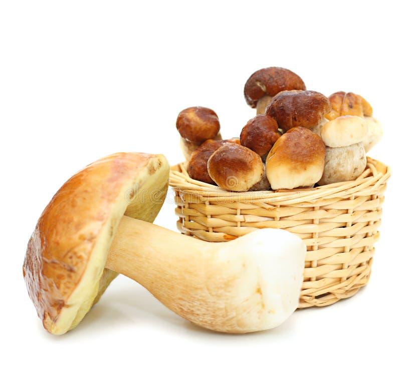 篮子牛肝菌蕈类可食蘑菇秸杆 免版税库存照片