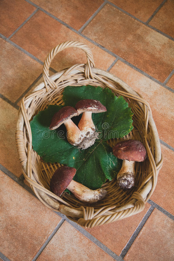篮子用四在地板上的蘑菇 免版税库存图片