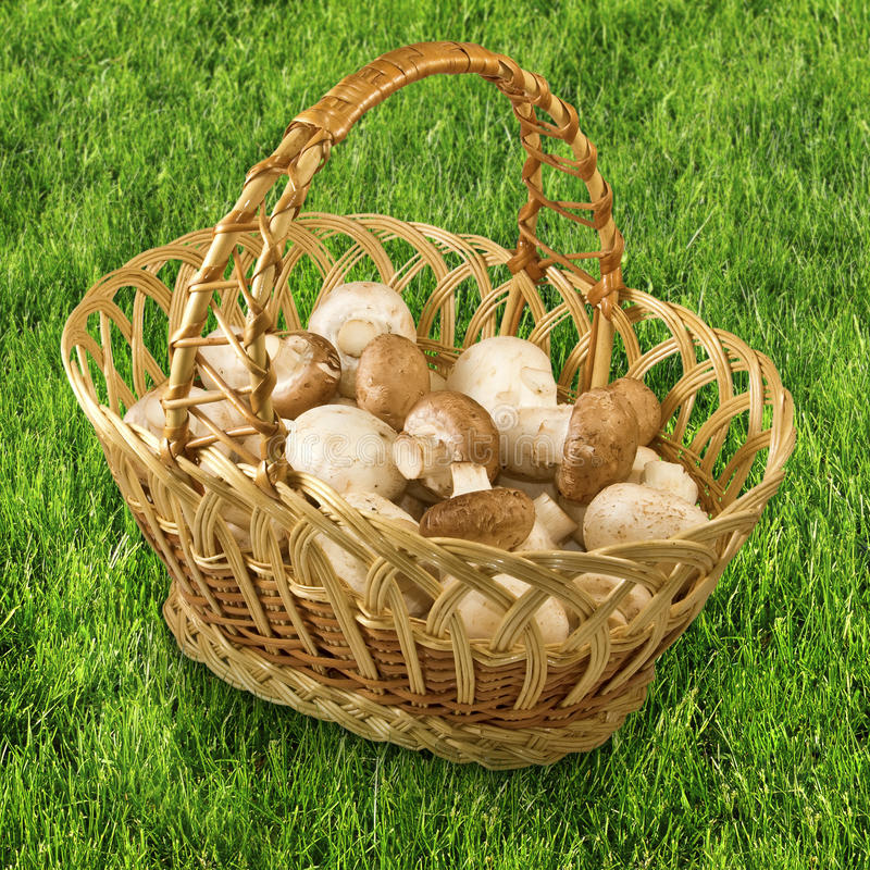 篮子用在草的蘑菇 库存图片