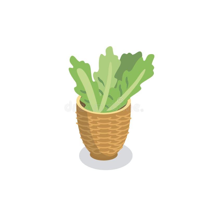 篮子用新鲜的莴苣 皇族释放例证