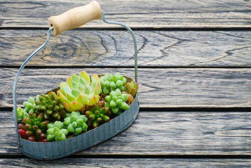 篮子的小绿色多汁植物在与拷贝空间的木背景 免版税库存照片