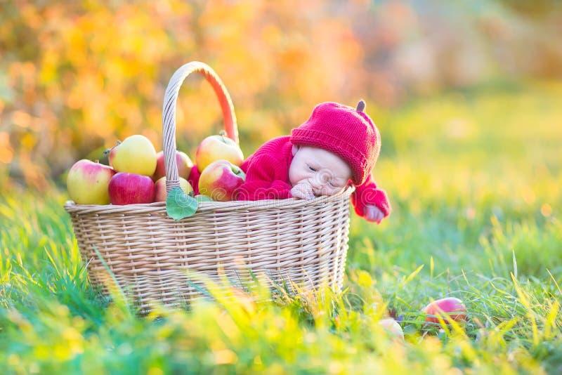 篮子的新出生的婴孩用苹果在庭院里 库存图片