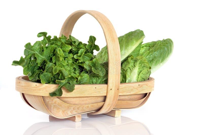 篮子莴苣土气种类 免版税库存图片