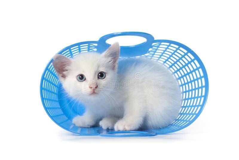 篮子蓝色隐藏的小猫塑料 免版税库存照片