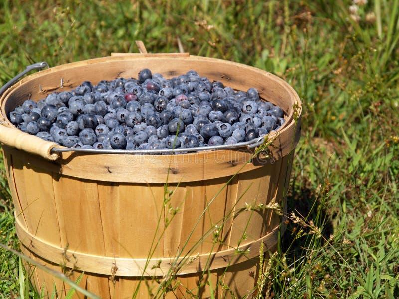 篮子蓝莓 库存照片