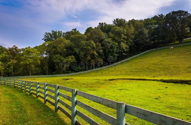 篱芭和农田在农村约克县,宾夕法尼亚 库存图片