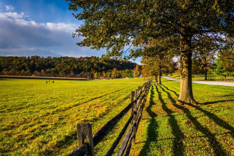篱芭和树沿一条乡下公路在农村约克县, Pennsy 库存照片