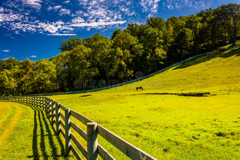 篱芭和美好的农田在约克县,宾夕法尼亚 免版税库存照片