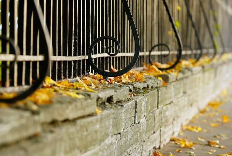 篱芭和黄色叶子 免版税库存照片