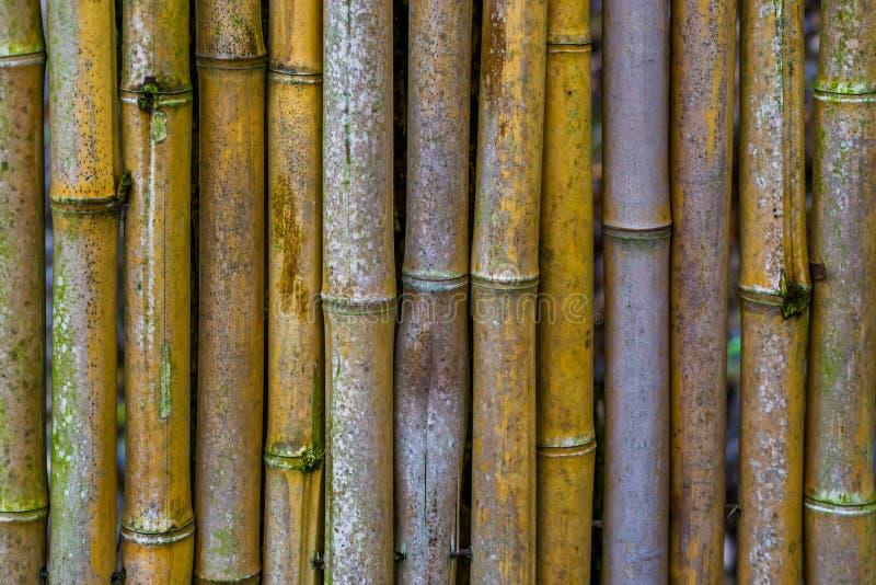 篱芭由在特写镜头,自然日本背景,亚洲庭院装饰的竹树干做成 免版税图库摄影
