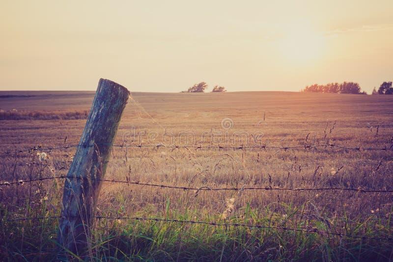 篱芭葡萄酒照片在草甸的 图库摄影