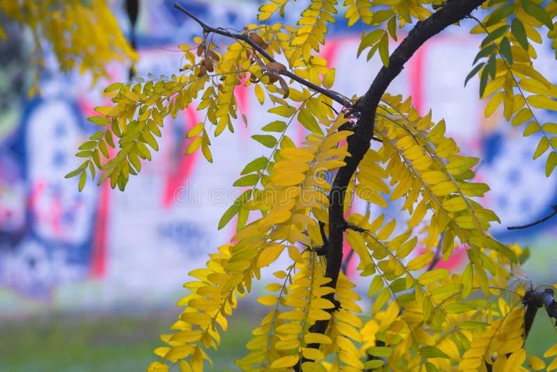米兰公园在秋天 免版税图库摄影
