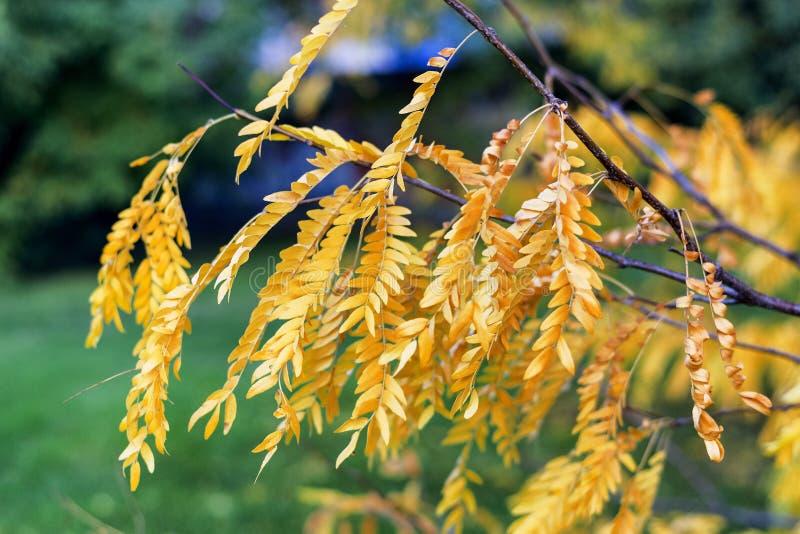 米兰公园在秋天 库存照片