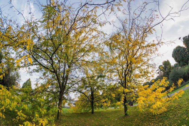 米兰公园在秋天 库存图片