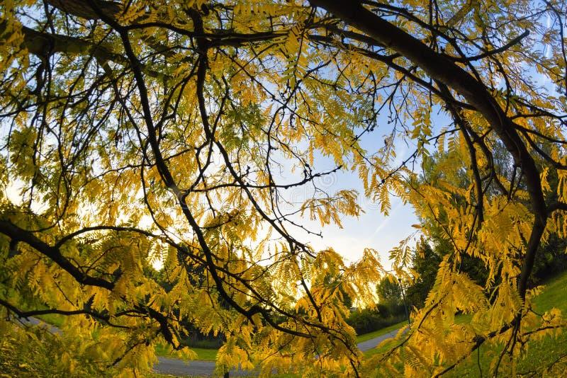 米兰公园在秋天 免版税库存图片