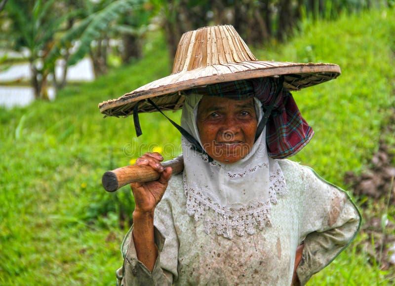 米农田劳工在武吉丁宜,印度尼西亚 免版税库存照片