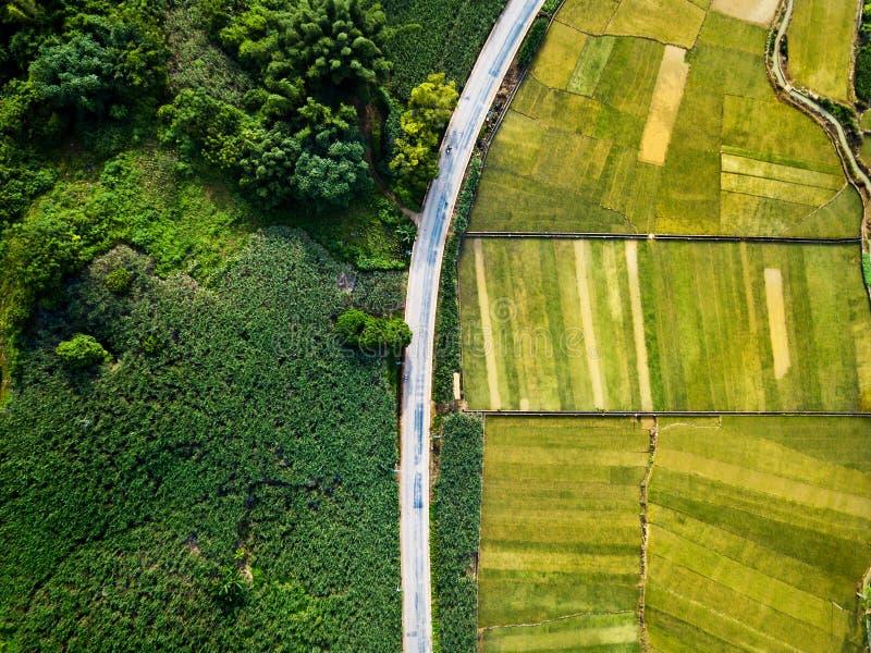 米和甘蔗领域由路鸟瞰图划分了 免版税图库摄影