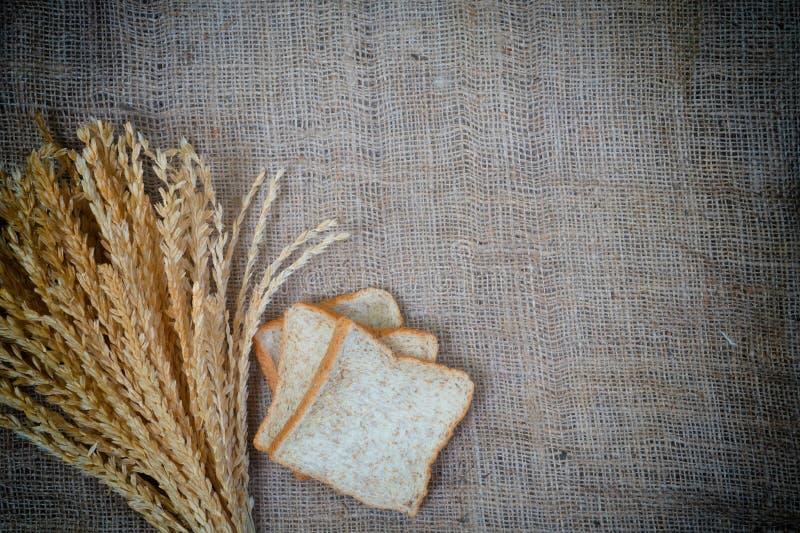 米和面包的耳朵 免版税库存图片