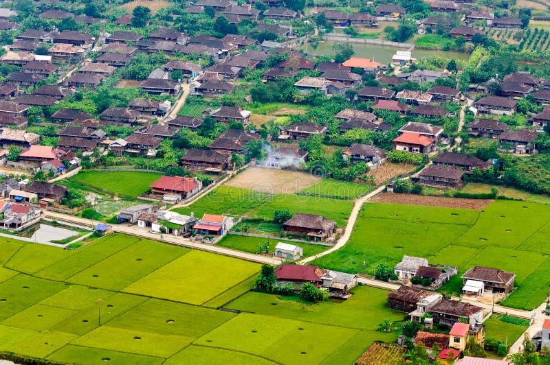 米在大阳台调遣在种植在越南 库存照片