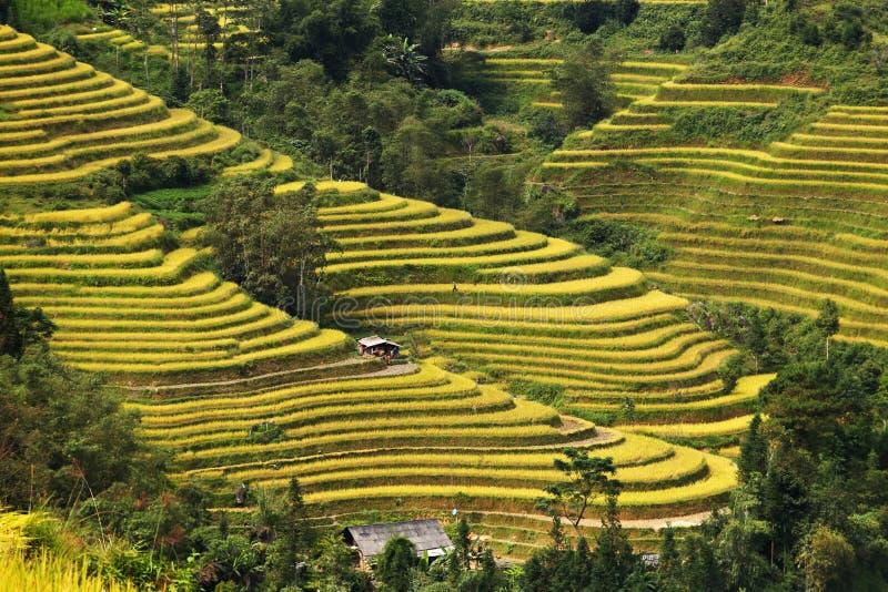 米在河江市- Sapa越南西北部的大阳台领域 中国,印度支那 库存照片