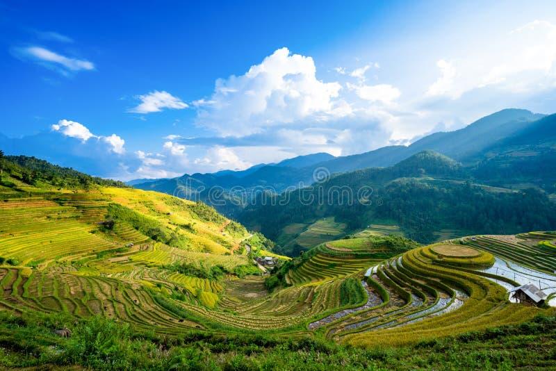 米在雨季的大阳台调遣在La平底锅Tan, Mu Cang柴 免版税库存照片