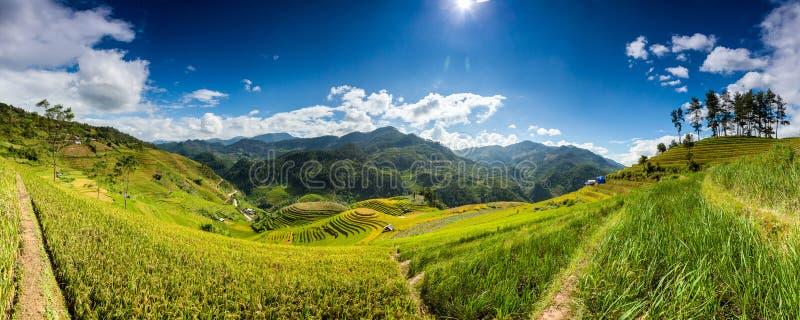 米在雨季的大阳台调遣在Mu Cang柴,安沛市,越南 米领域为移植做准备在西北越南 免版税库存图片