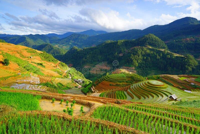 米在雨季的大阳台调遣在Mu Cang柴,安沛市,越南 免版税图库摄影