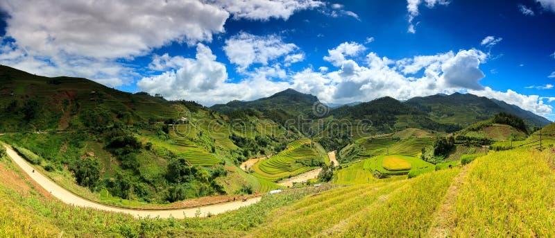 米在露台调遣在日落在Mu cang柴,越南米领域在西北越南准备收获 横向 库存照片