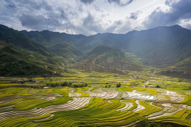 米在露台调遣在rainny季节在Tu Le village,安沛市,越南 免版税图库摄影