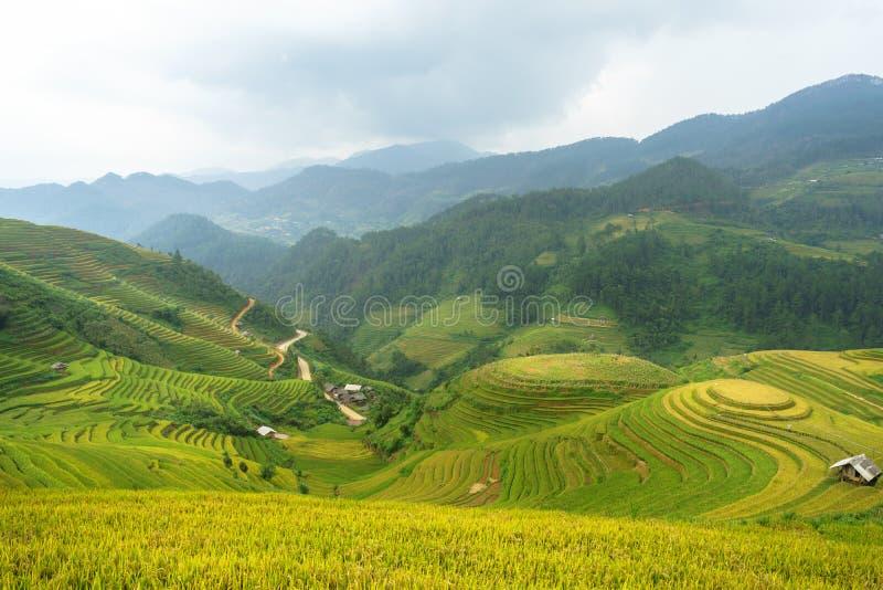 米在露台调遣Mu Cang柴, YenBai,米领域在西北越南准备收获 越南风景 库存图片