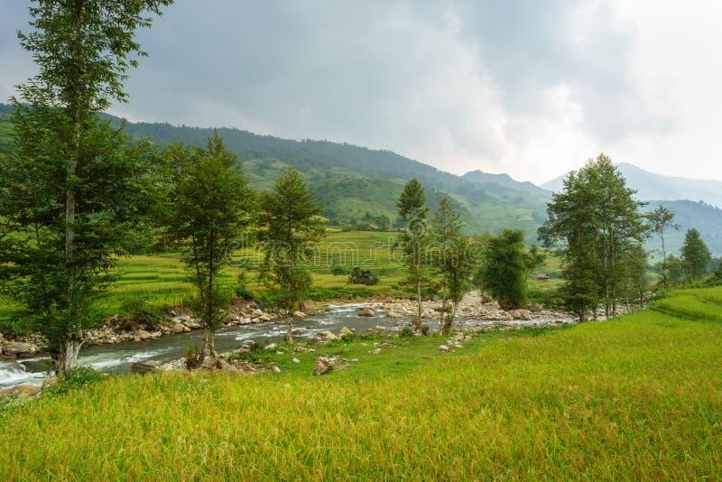 米在露台调遣Mu Cang柴, YenBai,米领域在西北越南准备收获 越南风景 免版税库存图片