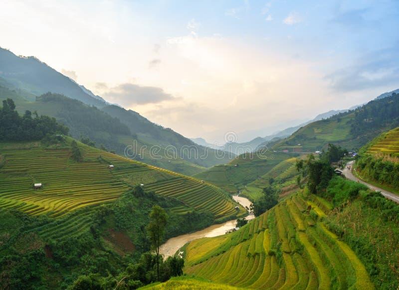 米在露台调遣Mu Cang柴, YenBai,米领域在西北越南准备收获 越南风景 库存照片