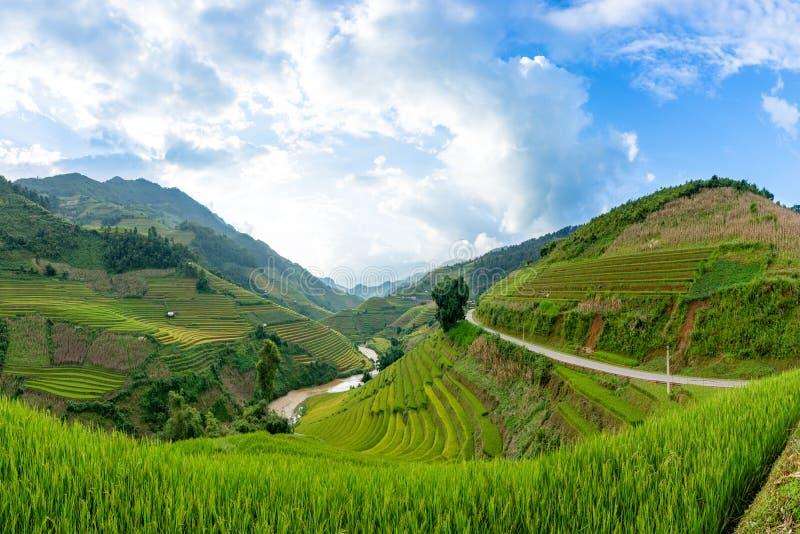 米在露台调遣Mu Cang柴,安沛市,越南 免版税库存照片