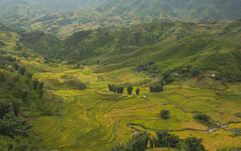 米在露台调遣SAPA,越南 米领域在西北越南准备收获 免版税图库摄影