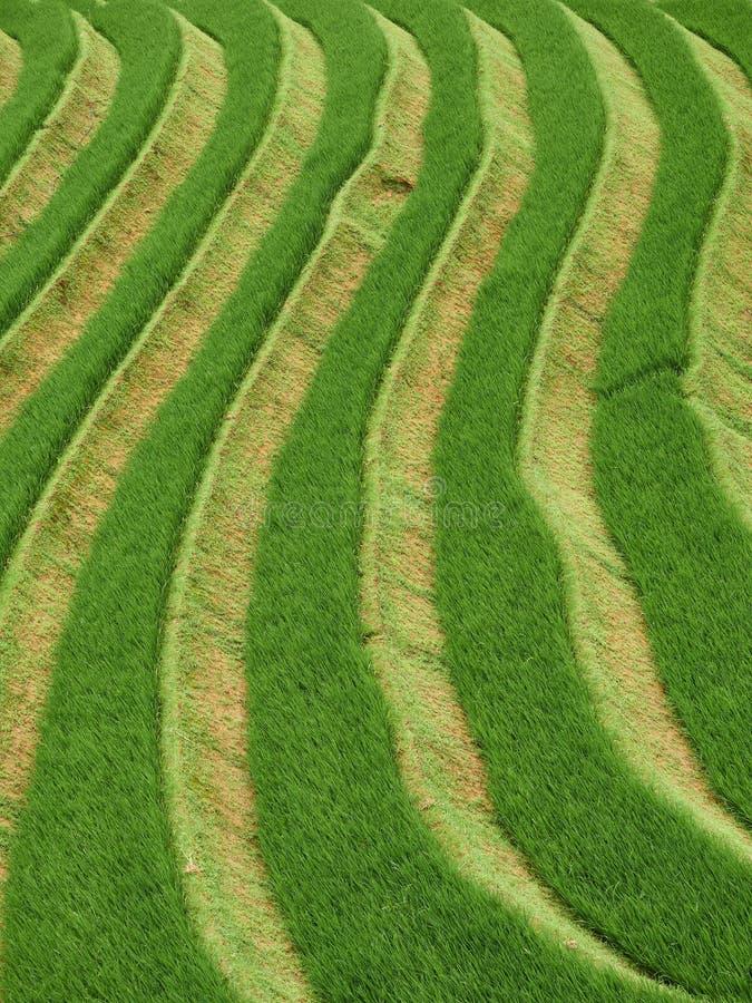 米大阳台和村庄稻米在山在雨季 库存照片
