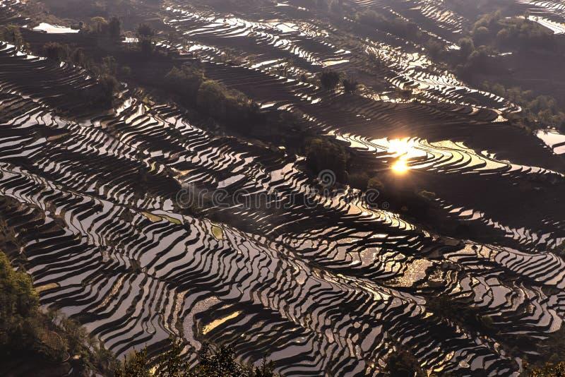 米大阳台在原阳,云南,中国 免版税图库摄影
