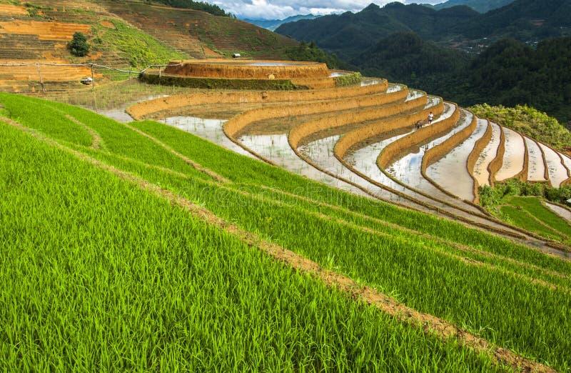 米大阳台在越南 图库摄影