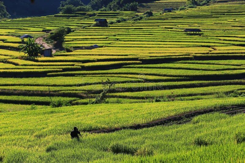 Download 米大阳台,清迈,泰国 编辑类库存照片. 图片 包括有 问题的, 工厂, 培养, 农田, 环境美化, 庄稼 - 62526358