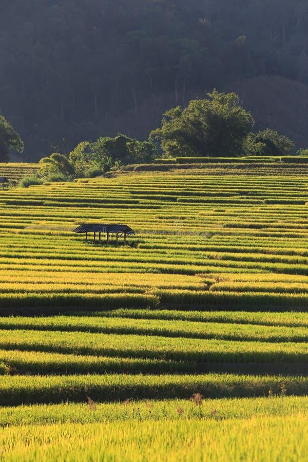 Download 米大阳台,清迈,泰国 库存图片. 图片 包括有 环境, 问题的, 巴厘岛, 种田, 曲线, 外部, 全景 - 62526375