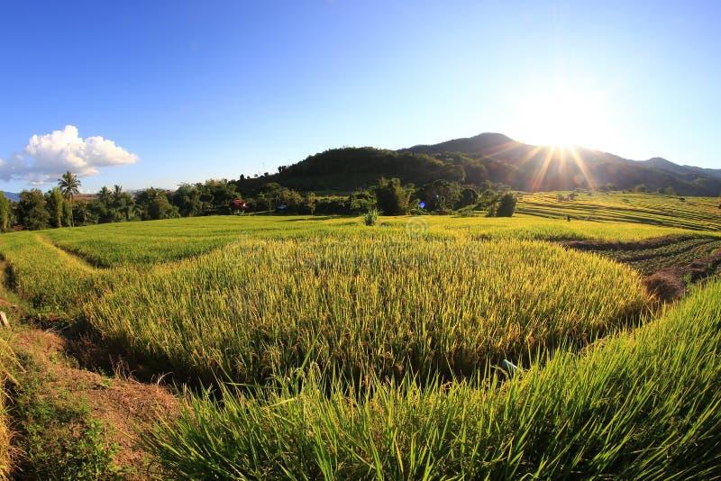 Download 米大阳台,清迈,泰国 库存图片. 图片 包括有 种植园, 庄稼, 背包, 农田, 种田, 农场, 聚会所 - 62526377