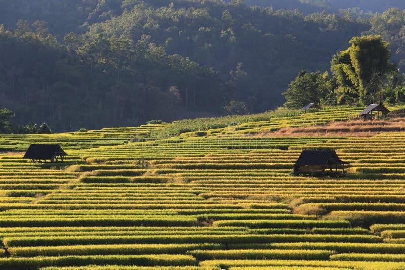 Download 米大阳台,清迈,泰国 库存照片. 图片 包括有 横向, 问题的, 地标, 聚会所, 模式, 农场, 环境 - 62526378