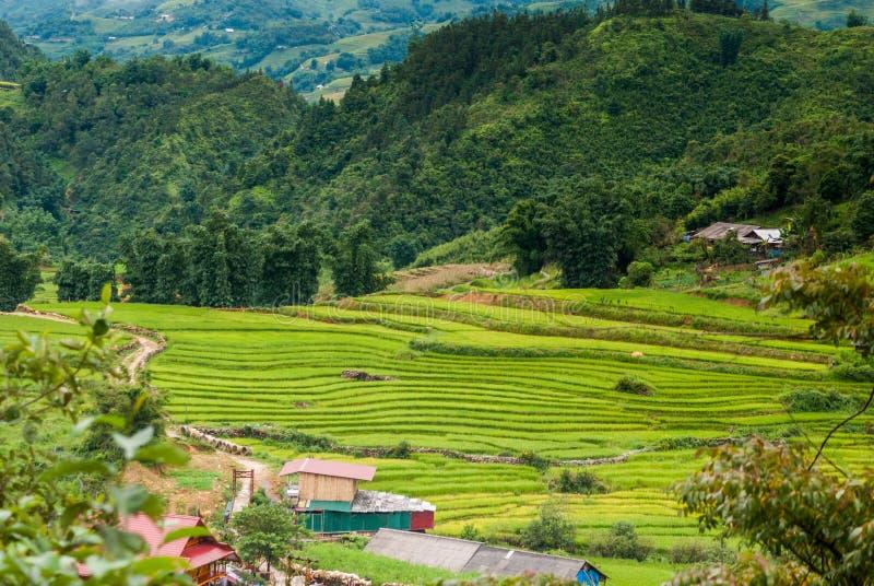米大阳台,风景在猫猫村庄,Sapa,越南 免版税图库摄影