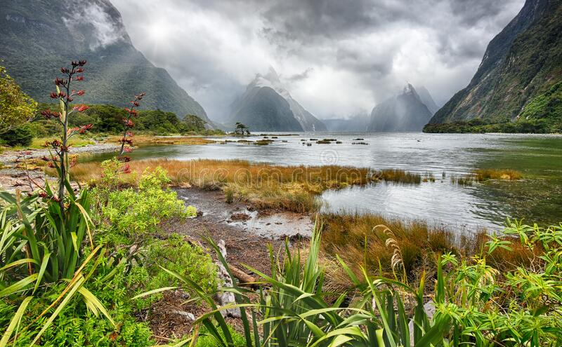 米尔福德湾,新西兰 库存照片