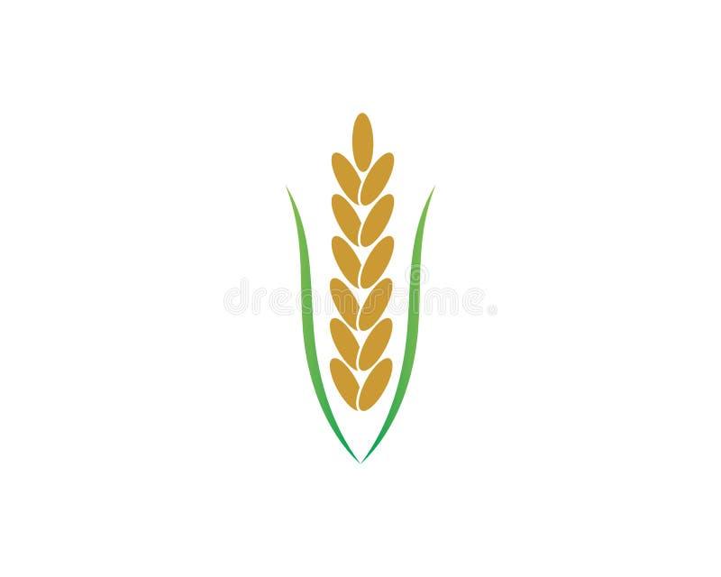 米有机传染媒介象模板 库存例证