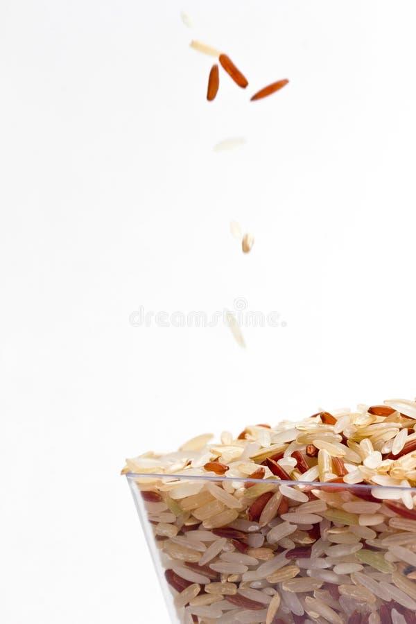 米种子 库存图片