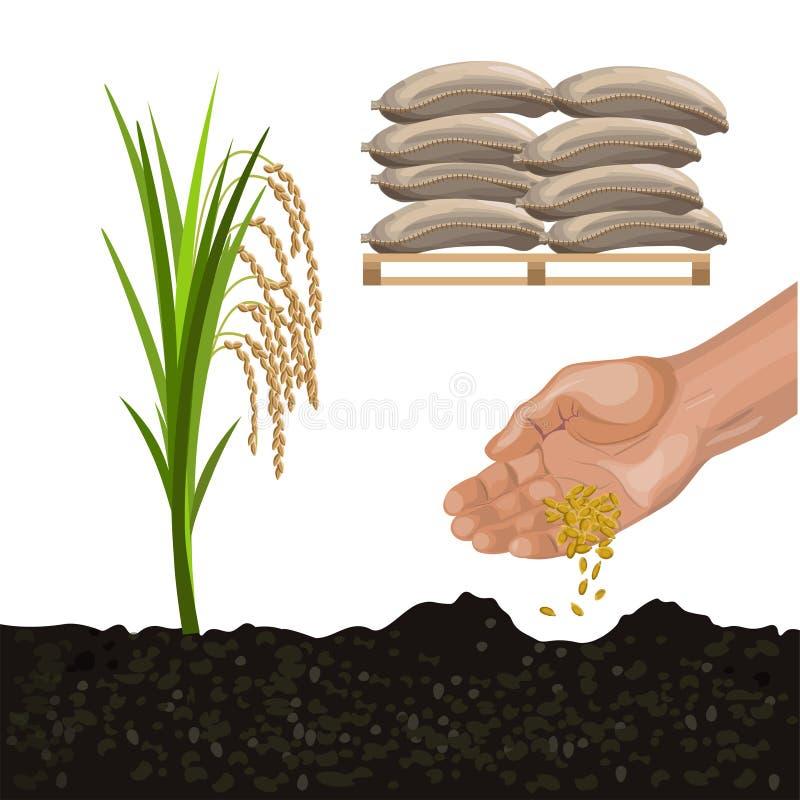 米耕种传染媒介 皇族释放例证