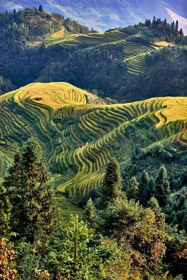 米露台的领域Wengjia longji龙胜湖南中国 库存图片