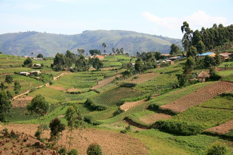 米领域在乌干达,非洲 免版税库存照片
